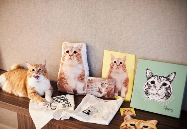 """垂れ目の困り顔猫""""ぐっぴー"""" フォロワー26万人以上の超人気者に!"""
