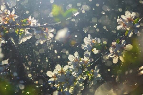 花粉、日焼け、マスク荒れも防ぐ!…『キュレル』敏感肌用のUVケア、人気の秘密