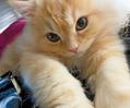 あざとかわいい~にゃんこが豊作 anan猫さま大賞「美猫賞」発表!