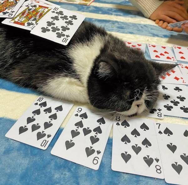 """飼い主にハラスメント!? かわいすぎて困る""""猫さま""""6選"""