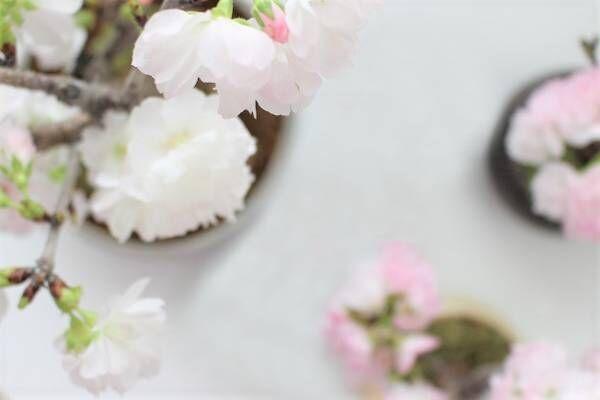 桜咲く季節に渡したい 春色ギフト集めました。[PR]