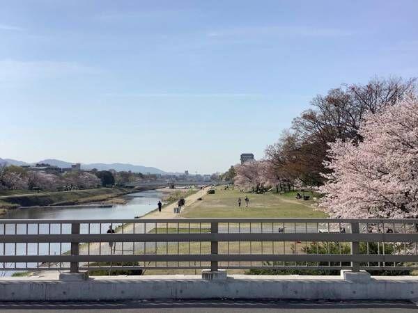 【京都のちょっといいこと】〜京都桜便り〜[PR]