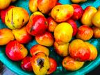 ダイエット大国アメリカで大流行!食べるだけで痩せる「驚異のフルーツ」とは
