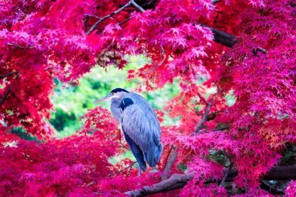 """秋を堪能。紅葉から感じる""""恋心""""とは?【11月2~6日】"""