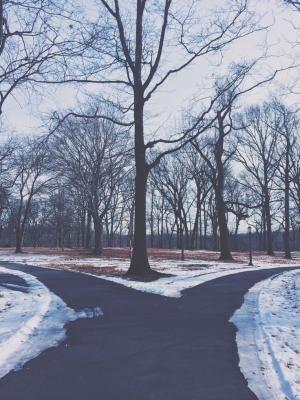 もしもあの時、こちらの道を選んでいれば! ~『ブルーもしくはブルー』に学ぶ後悔のない生き方~