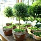 冬だってベランダ菜園!初心者でも成功するハーブの種類と育て方(お料理レシピも!)