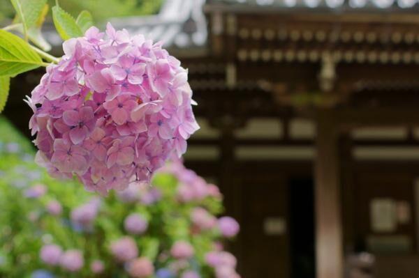女性に大ブーム中!お寺や神社巡りが楽しくなる「御朱印集め」の魅力とは?