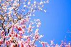 新しいことに挑戦したい春!「行動力」アップのコツとは?