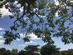 「アフリカで小さな冒険〜Botanical Garden〜」前編