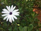 「アフリカで小さな冒険〜Botanical Garden〜」後編