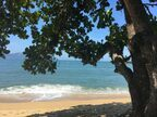 リオの秘島で海亀に遭遇した朝