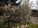 やっと北国に春が来ました!