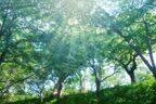 モヤモヤは自然の力で吹き飛ばそう♪「森林浴」のすごい効果