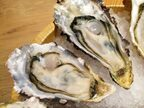 海のミルクと言われるワケは?「牡蠣」が楽しめる都内のおすすめ店2選