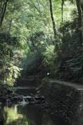 都心と思えない!緑と木に癒やされる「等々力渓谷」の週末朝時間♪
