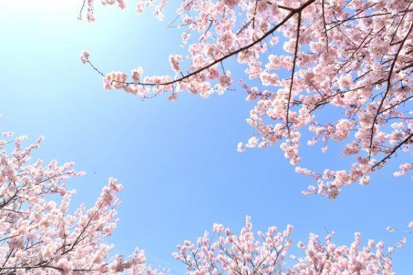 春に向けて!今から考えたい「やりたいこと」と「達成するヒント」