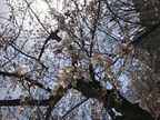 春の朝活はテラスモーニング!