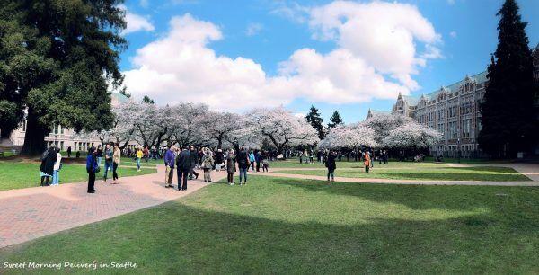 シアトルの桜 2018「花見」は英語で?
