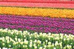 自然を満喫!関東で楽しむ「春のおでかけ」スポット3選