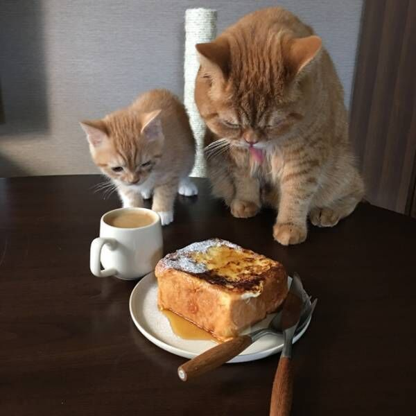 猫とパン★24時間ひたして蒸し焼きで仕上げる「極厚フレンチトースト」