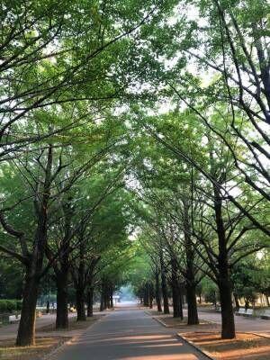 新緑がキレイな朝の公園