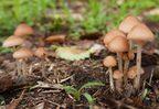 """""""mushroom growth""""ってどういう意味?キノコを使った英語表現2選"""