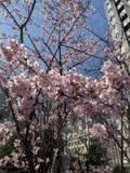 【新宿】NEWoManで朝から幸せモーニングプレート@沢村 新宿【vol.207】