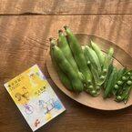 エッセイ『東京日記』と一緒に味わいたい♪春の「ホタルイカ入り豆ごはん」