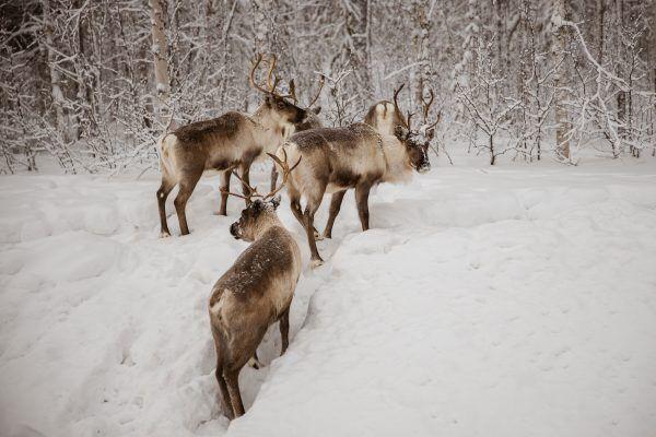 スウェーデンの雪山