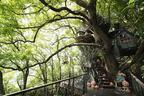 樹上に魔女の家が現れる!10月1日からリゾナーレ熱海『くすくすの森 ハロウィン』スタート