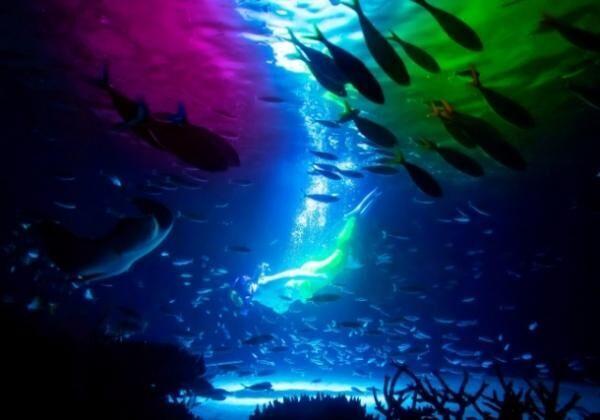 サンシャイン水族館で新水中パフォーマンス「ラグーン・ファンタジー」開催中!