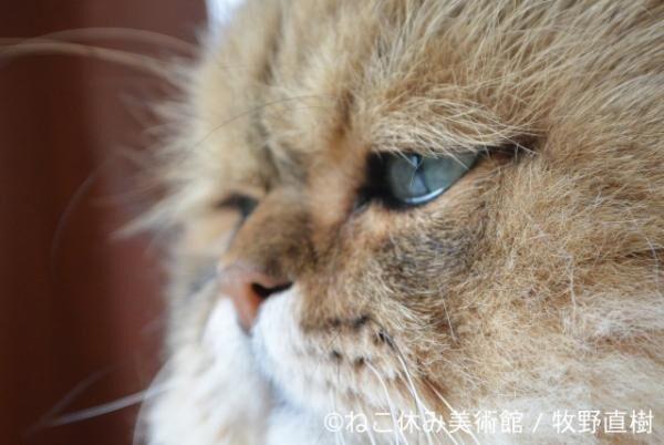 「ねこ休み美術館」東京・大阪・札幌で開催決定!猫と名画のにゃんとも素敵なコラボ
