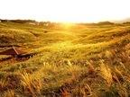 静岡県・東伊豆「秋のすすきイベント」が10月5日からスタート!いまだけの絶景を見に行こう