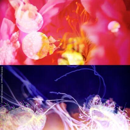 蜷川実花×クラゲが再びコラボ!すみだ水族館に幻想的な蜷川実花ワールドが広がる