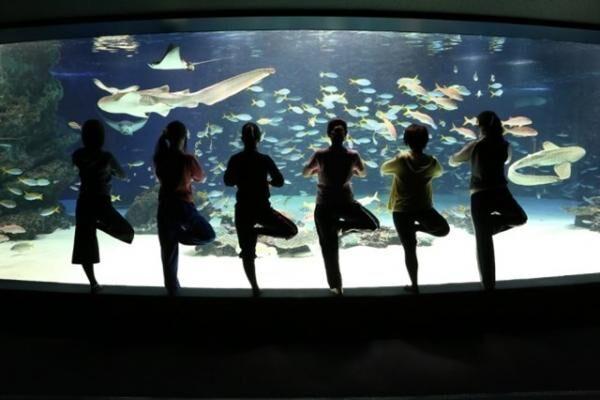 営業前の水族館や展望台でヨガレッスン!女性限定「サンシャインシティでヨガ!」に参加しよう