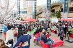 3月31日から六本木ヒルズ「春まつり2017」開催!桜を愛で、五感でお花見を体験しよう
