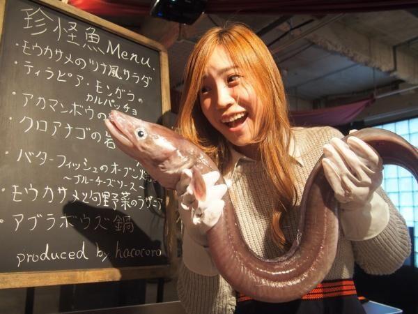 カンガルーやサメを食らう!珍肉&珍怪魚グルメイベント開催!