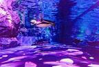 すみだ水族館で春の特別演出スタート!春満開の水槽に泳ぐペンギンとクラゲに癒される