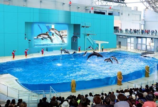 4月28日から新ショー開催!八景島シーパラダイス「海の動物たちのショー」を見に行こう
