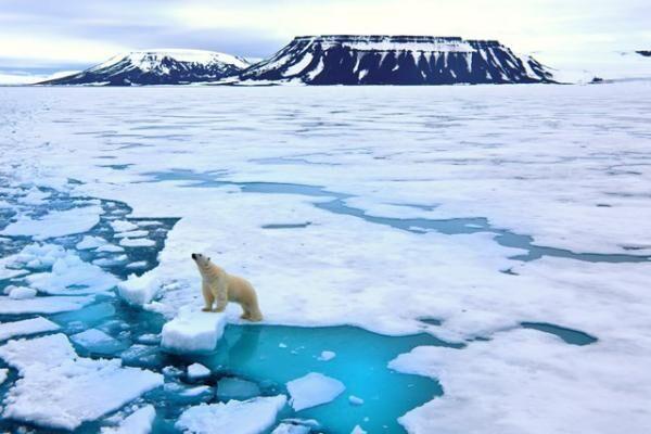 寒い極地世界が夏の二子玉川に出現!「南極&北極展」が、玉川髙島屋S・Cで開催
