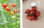 熱中症&夏バテ予防に効く食材が勢ぞろい!6月10日・11日「太陽のマルシェ」開催