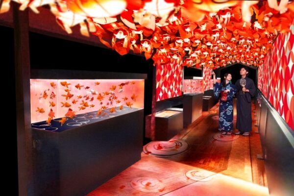 お江戸の夏の風物詩、金魚の魅力を堪能する「東京金魚ワンダーランド」