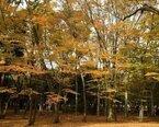 きれいのための秋のレシピ 〜とっても簡単!和風きのこマリネ〜