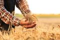【もち麦ダイエット】方法や効果を高めるポイント・レシピを紹介