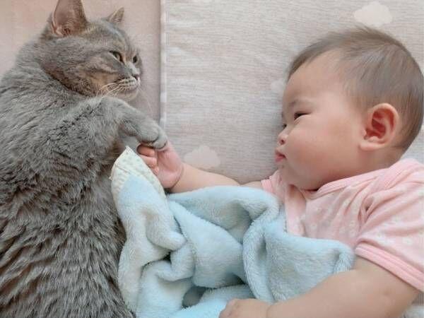 生後7カ月の赤ちゃん・ポンちゃんと猫のロン(5歳)・ギン(4歳)