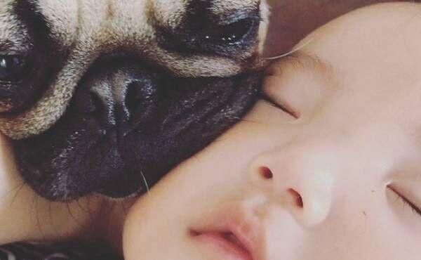 生後8カ月の赤ちゃん・暖くん(男の子)とパグのダンプ(♀)