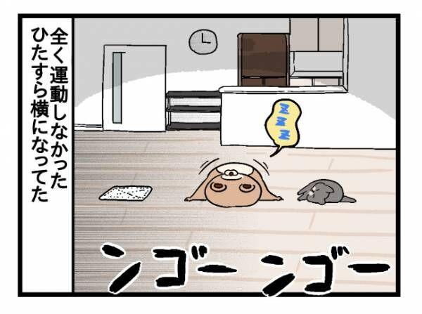 ねこたぬのはじめて育児3