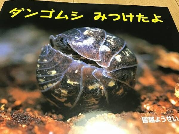 『ダンゴムシ みつけたよ』(ポプラ社)
