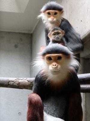 (Photo by よこはま動物園ズーラシア)