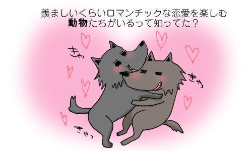 羨ましいくらいロマンチックな恋愛を楽しむ動物たちがいるって知ってた?